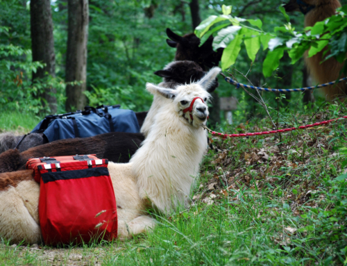 Take a Hike with a Llama