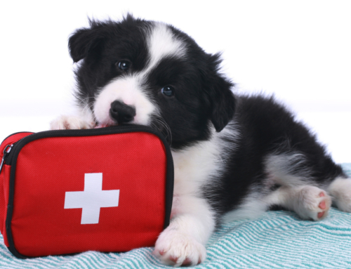 Red Cross Offers Online Cat and Dog First Aid Course
