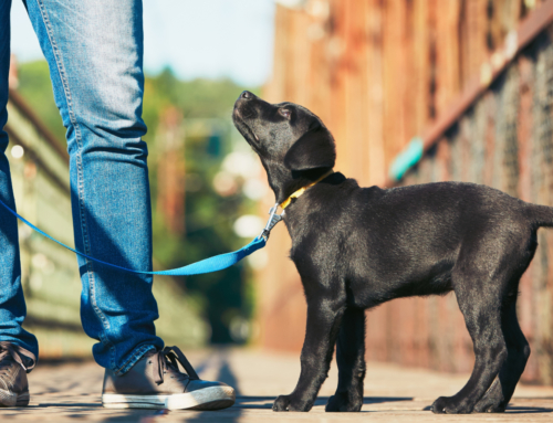 Rover.com Makes Walking Your Dog a Cinch