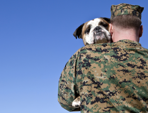 Rocky Mountain Dawgs Project Pairs Service Dogs With Veterans