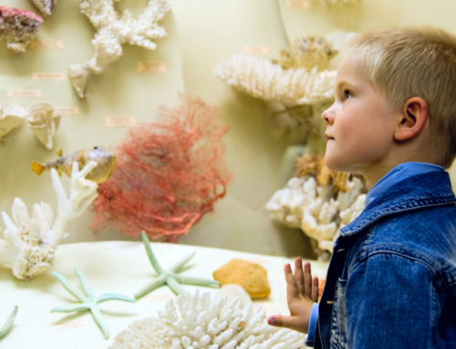 Keep Kids Entertained at the Fort Collins Museum of Discovery